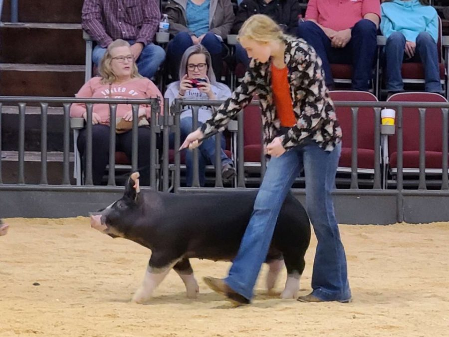 Kailee Slottke shows her prize winning hog during the Stephens County Junior Livestock Show.